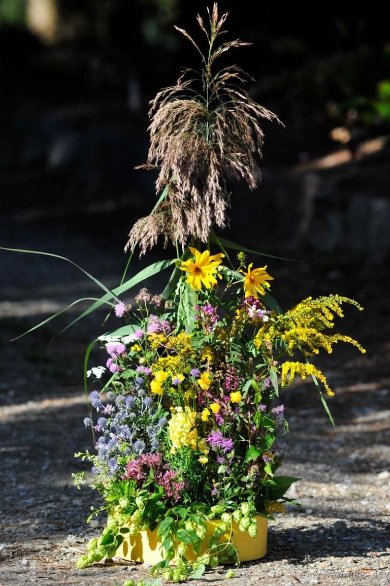 bukiet łąkowy, wrzesień
