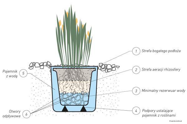 Mini sadzawka - rośliny w pojemniku