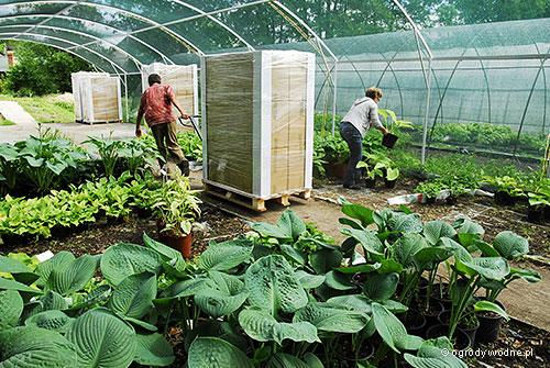 Rośliny spakowane na paletę, gotowe do wysyłki