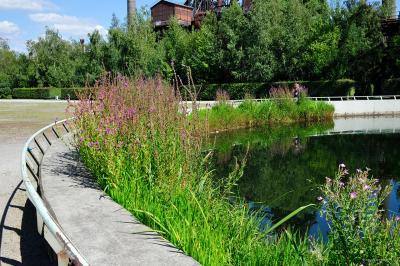 Zbiornik pofabryczny z roślinami